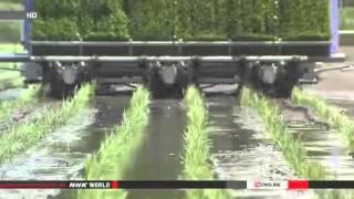 Nclear Watch: Japan Resumption of rice farming slow in Fukushima (06/11/2014)