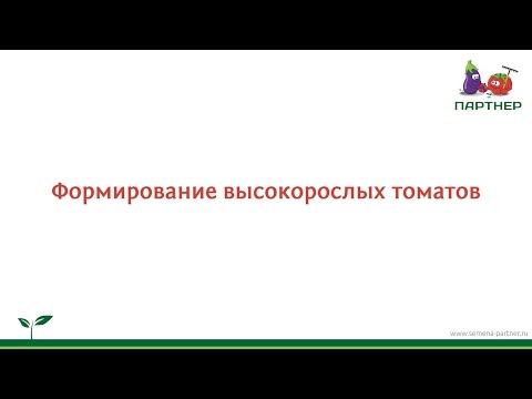 Формирование высокорослых томатов