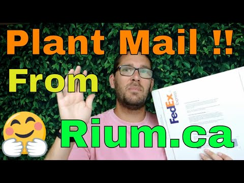 Unboxing Some Wish List Plants From Rium - Canadian Online Plant Seller