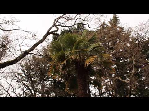 Beacon Hill Park Victoria BC