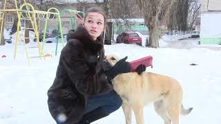 Бродячие собаки в Воронеже