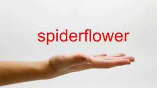 How to Pronounce spiderflower - American English