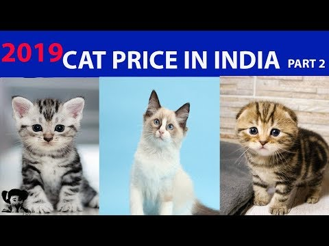 PRICE OF CAT IN INDIA l COST OF CATS IN INDIA l KITTEN PRICE 2019 l PART 2 CATS
