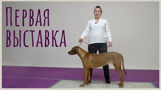 Наша первая выставка | DogTalk