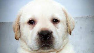 Dehradun Dog Show 8650006680