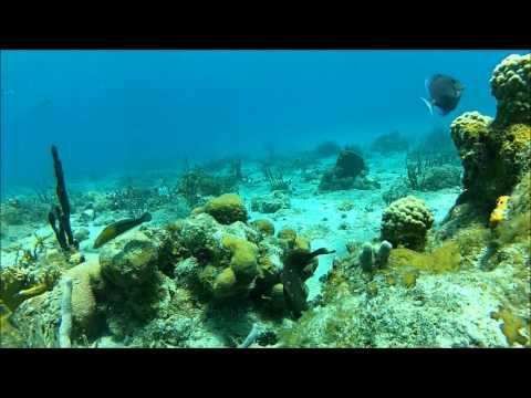 Snorkeling in St. Thomas, US Virgin Islands - buck island ...