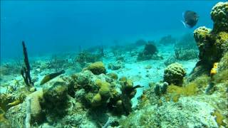 Snorkeling in St. Thomas, US Virgin Islands - buck island GoPro HD