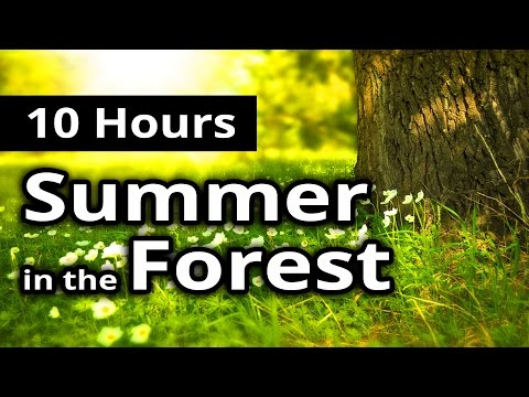10 HOURS - SUMMER in the FOREST - Relaxing Nature Sounds - Meditation + Sleep