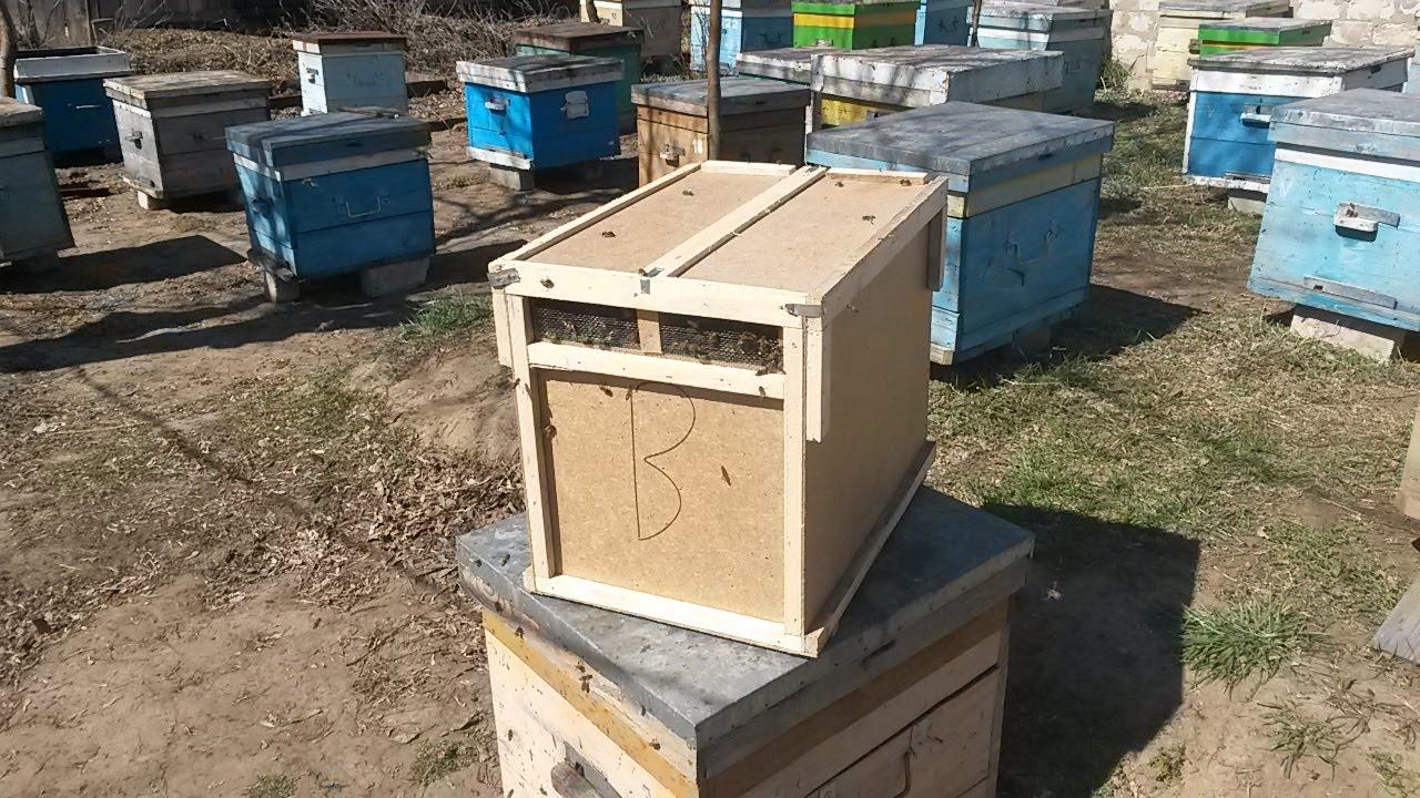 Пересадка пчелопакета в улей/Что такое пчелопакет/Первые шаги в пчеловодстве.
