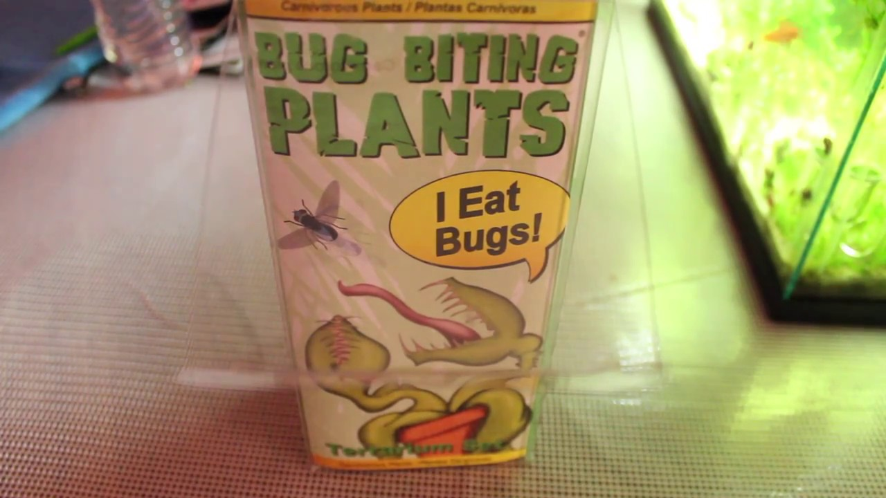 Venus Fly Trap And Pitcher Plant From Lowes Big Biting Plants Youtube