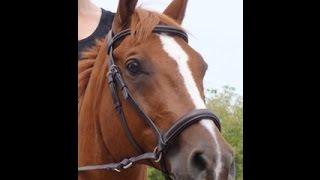 Symptoms of Horse Pneumonia