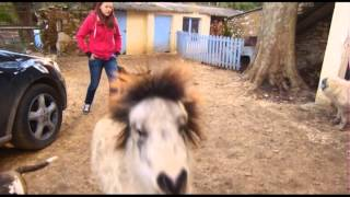 Xena la ponette Pitbull anti effraction :) Audrey HASTA LUEGO HORSE SHOW