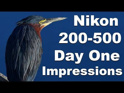 Nikon 200-500mm Lens First Day Impressions Wildlife / Birding Photography