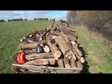 In the woods, cutting firewood on a wisconsin organic dairy farm
