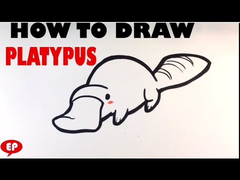 How to Draw a Platypus (cute) - Easy Pictures to Draw ...