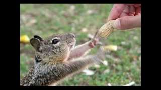 Pet Life Radio presents -  Mark Winter -