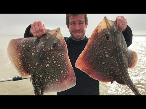 Thornback Rays, Skate, Roker - Boat Fishing Rigs, Tips & Tactics!
