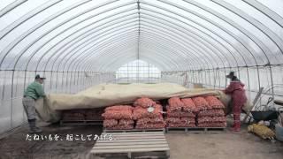 POTATO FARM BRAND MOVIE 「花盛り」篇