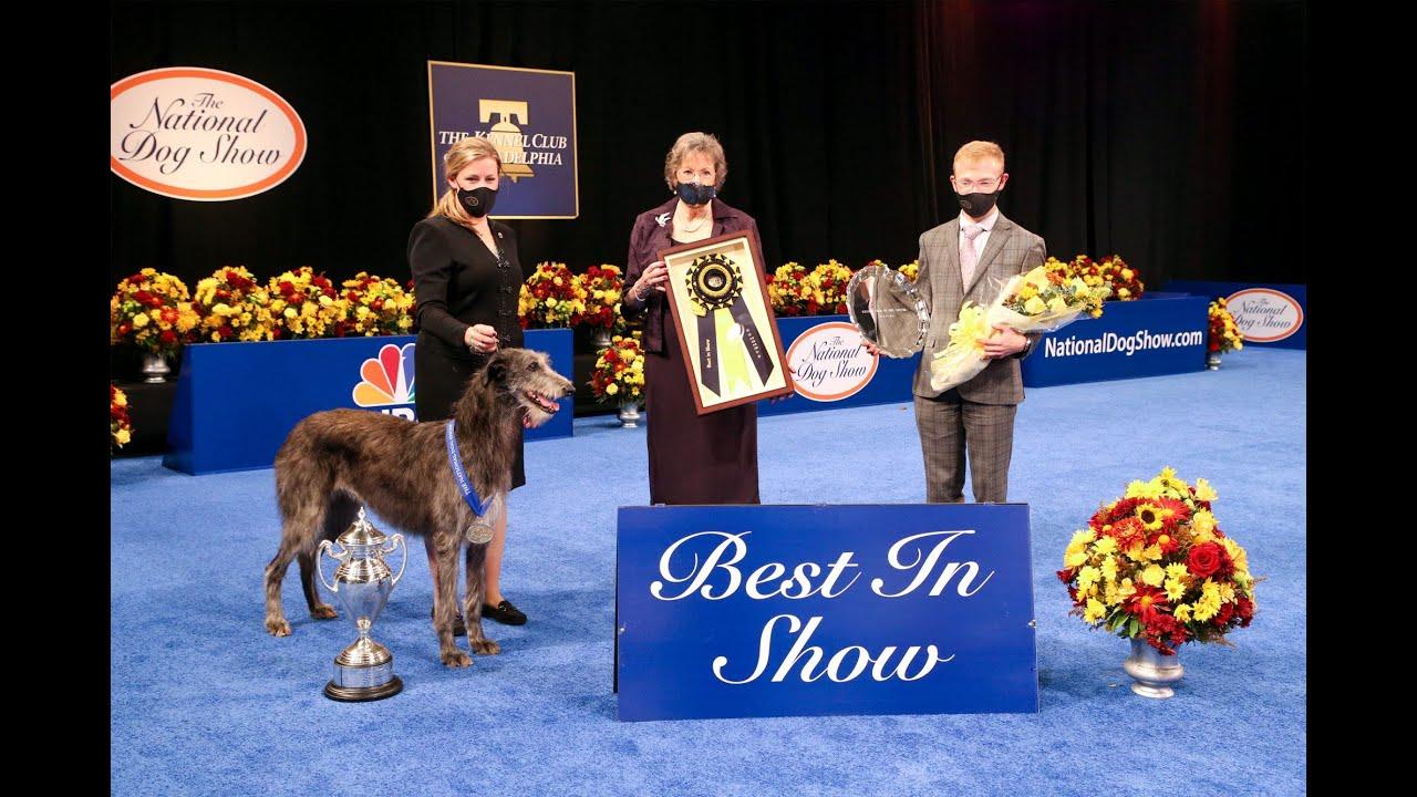 National Dog Show: Claire the Scottish Deerhound wins - CNN