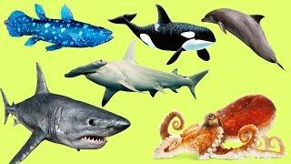Животные для детей | Учим названия и звуки Животных Океана |Животные Океана для детей |Учим животных