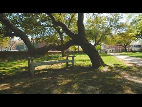 Serene Campus Scene: Wren Yard Bench & Tree