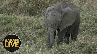 safariLIVE - Sunset Safari - November 20, 2018