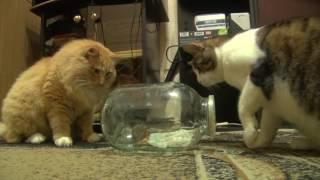 Кошачьи забавы. 2 часть Cat's fun. part 2