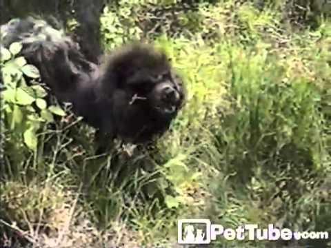 The SNEEZIEST Animals: Mashup- PetTube