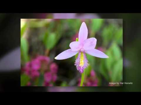 The Secret Life of Orchids – Part I: Fungi