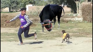 Pointer Dog Breed In Pakistan .Sweet dog HD Vidoes 20.20
