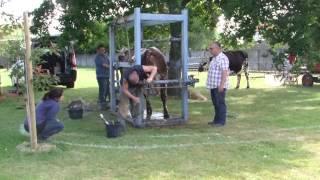 Camille et Eric marechaux ferrands pour vaches