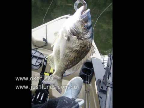 Patonga Fishing