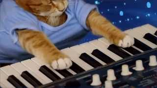 Repeat youtube video Keyboard Cat -