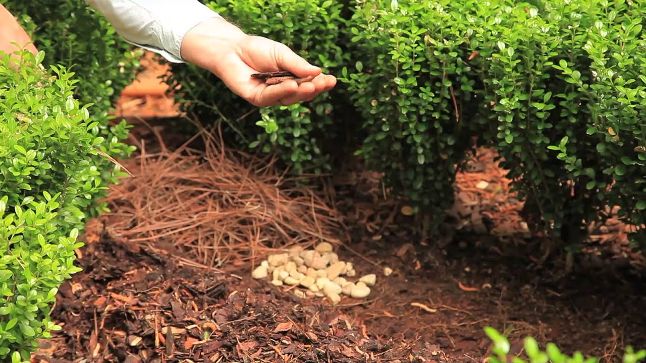 mulch shrubs landscaping