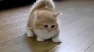 Мини кошка мимишка, мимишное видео с маленькой кошкой