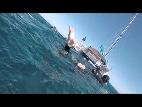 Wild Dolphin Swim with Temptation Sailing, Glenelg, Adelaide, SA 15/11/15