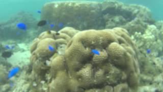 個人シュノーケルの人気ポイント、沖縄県石垣島の米原ビーチの熱帯魚の...