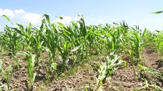 Divjakë, thahen tokat bujqësore - Top Channel Albania - News - Lajme