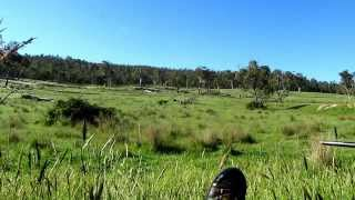 Hunting Wild Dogs in Australia.