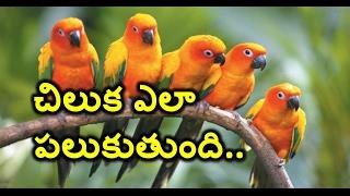 Revealed :The secret to how parrots talk