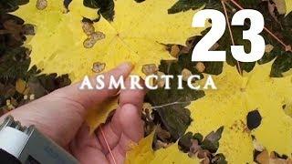 ASMR One Hour Treexploring - Autumn Woods, Sounds of leaves, Soft Spoken