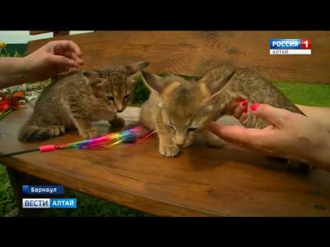 Вопрос: Почему люди готовы платить миллионы за породистых котят с родословной?