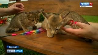 Знаменитая барнаульская кошка за миллион родила троих котят