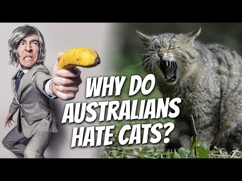 Why do Australians HATE CATS?