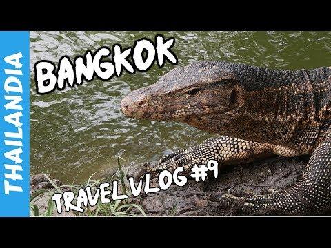 A caccia di Varani al Lumpini Park - Bangkok - Vacanza in Thailandia 2017 - Travel Vlog #9 🇹🇭