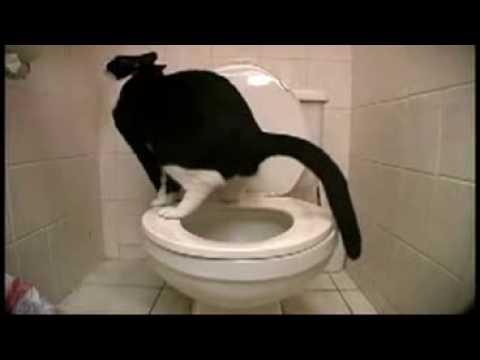 un chat qui fait caca comme un humain puis tombe ! - youtube