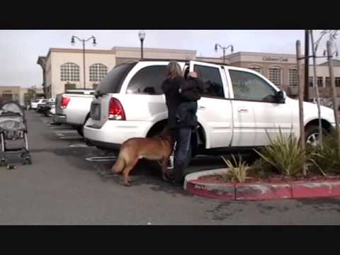 Personal Protection Dog Video