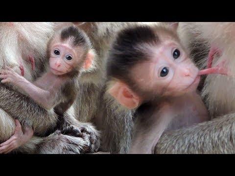 Amazing Newborn Baby