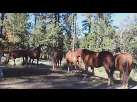 Activists urge DOT to put up digital speed reader signs to protect wild horse herd