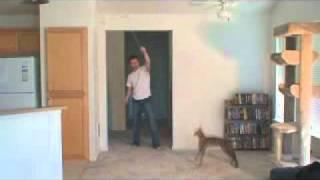 кошки Ашера